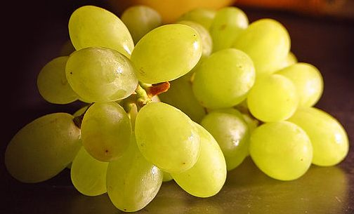 http://www.hashemian.com/blog/images/grapes.jpg
